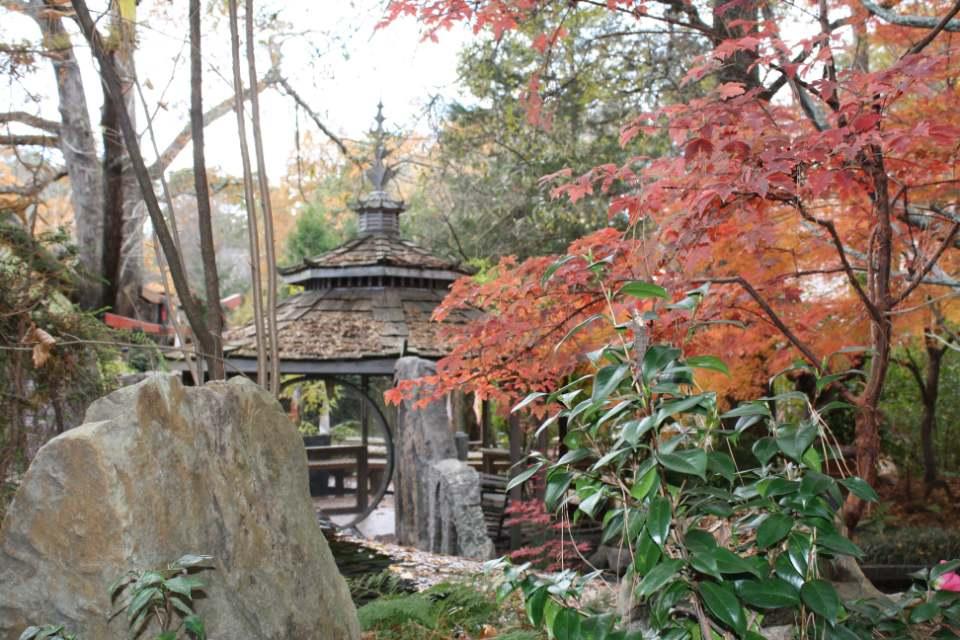 Uncommon Garden